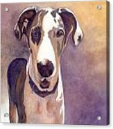 Puzzle The Great Dane Acrylic Print