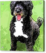Pw Dog Acrylic Print