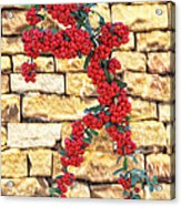 Pyracantha Berries On Stone Wall Acrylic Print