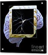 Pyramidal Neuron And Brain Acrylic Print