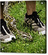Python Snake In The Grass And Running Shoes Acrylic Print