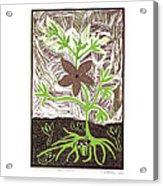 Qae Qane Acrylic Print