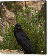 Qouth The Raven Nevermore Acrylic Print