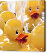 Quackers Acrylic Print
