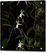 Quad Ghost Orchid Acrylic Print