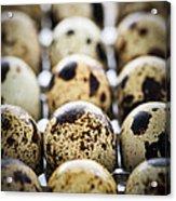 Quail Eggs Acrylic Print by Elena Elisseeva