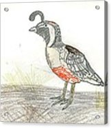 Quail Bird Acrylic Print