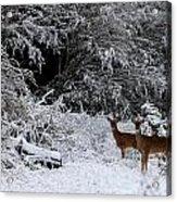 Quartet In The Snow Acrylic Print