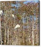 Quartet In The Trees Acrylic Print