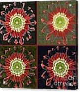 Quatro Floral - 0102cba Acrylic Print