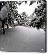 Queen City Winter Wonderland After The Storm Series 0030 Acrylic Print