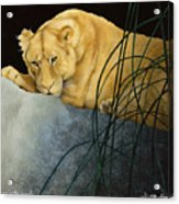 Queen Of The Jungle... Acrylic Print