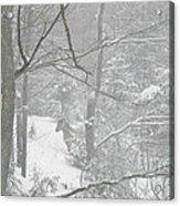 Querida In The Snow Storm Acrylic Print
