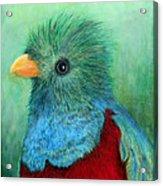 Quetzal Eye'n You Acrylic Print