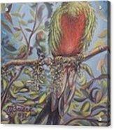 Quetzal On A Limb Acrylic Print