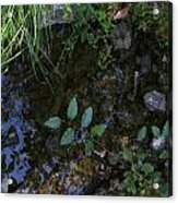 Quiet Brook In The Mountains Acrylic Print