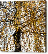 Quiet Charm Of Autumn Acrylic Print