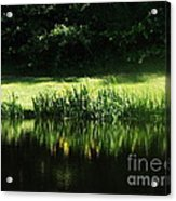 Quiet Reflection Acrylic Print