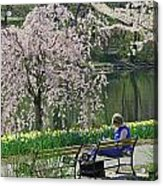 Quiet Time Among The Cherry Blossoms Acrylic Print