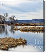 Quiet Wetlands Acrylic Print