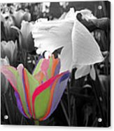 Quilted-look Tulip Gets A Nod From A Daffodil Acrylic Print