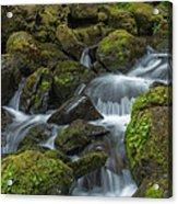 Quinault Waterfall Acrylic Print