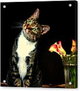 Quizzical Cat Acrylic Print