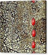 Quo Vadis Acrylic Print