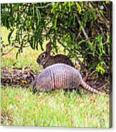 Rabbit And Armadillo Acrylic Print