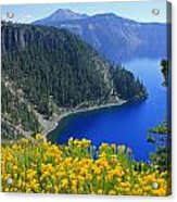 D2m5622-rabbit Brush At Crater Lake Acrylic Print