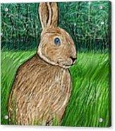 Rabbit In The Grass Acrylic Print