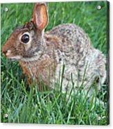 Rabbit On The Run Acrylic Print