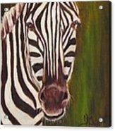 Racer, Zebra Acrylic Print