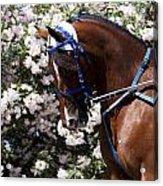 Racing Horse  Acrylic Print