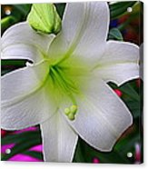 Radiant In White - Lily Acrylic Print