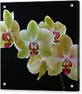Radiant Orchid Acrylic Print