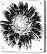 Radiant Solarized Acrylic Print