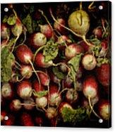 Flemish Radish Art Acrylic Print
