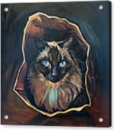 Cat Painting. Ragdoll Cat The Cat's In The Bag Acrylic Print