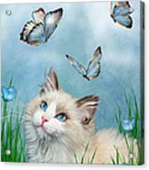 Ragdoll Kitty And Butterflies Acrylic Print