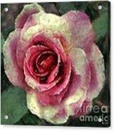 Ragged Satin Rose Acrylic Print
