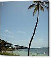 Railroad  Bridge And Palm Trees Acrylic Print