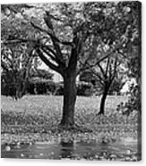 Rain And Leaf Ave In Black And White Acrylic Print