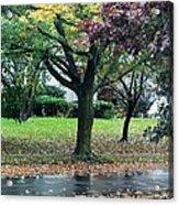Rain And Leaf Ave Acrylic Print