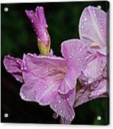 Rain Flower 1 Lavender Acrylic Print