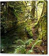 Rain Forest 2 Acrylic Print