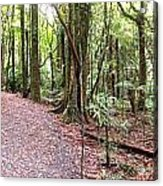 Rain Forest Acrylic Print by Les Cunliffe