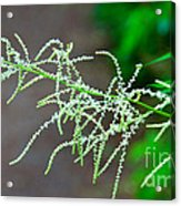 Rain Forest Magic Acrylic Print by Dana Kern