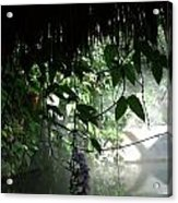 Rain Forest Overhang Acrylic Print