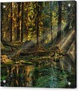 Rain Forest Sunbeams Acrylic Print
